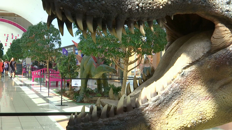 Messancy : les dinosaures envahissent la galerie du Cora