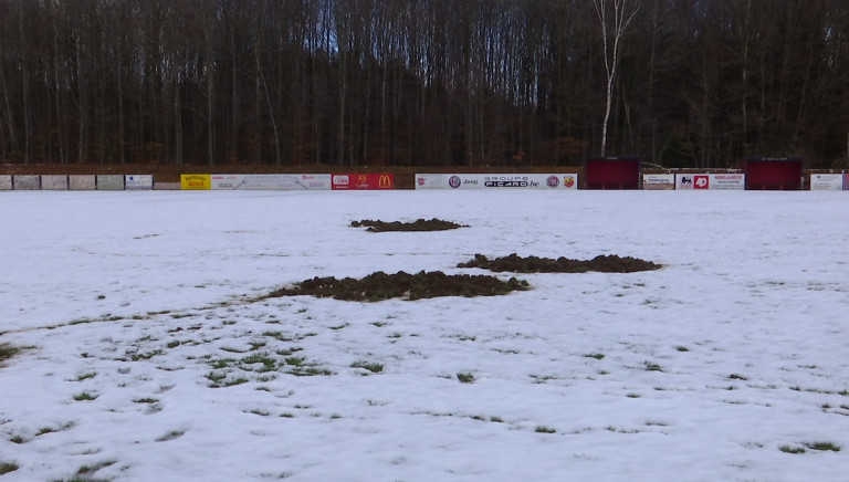 Habay : Football : un tour de cochon (sauvage) !
