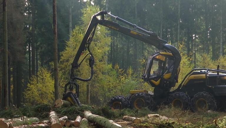 PPA. Les forestiers vont pouvoir reprendre le travail, sous conditions