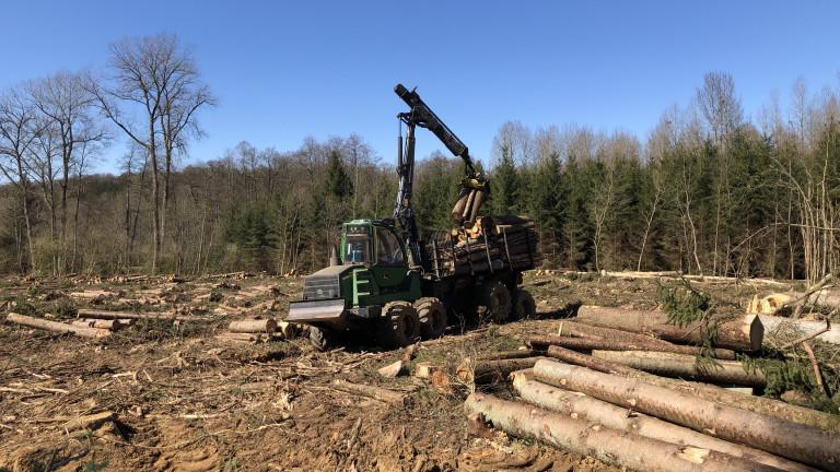 Les travaux forestiers peuvent reprendre en zone PPA