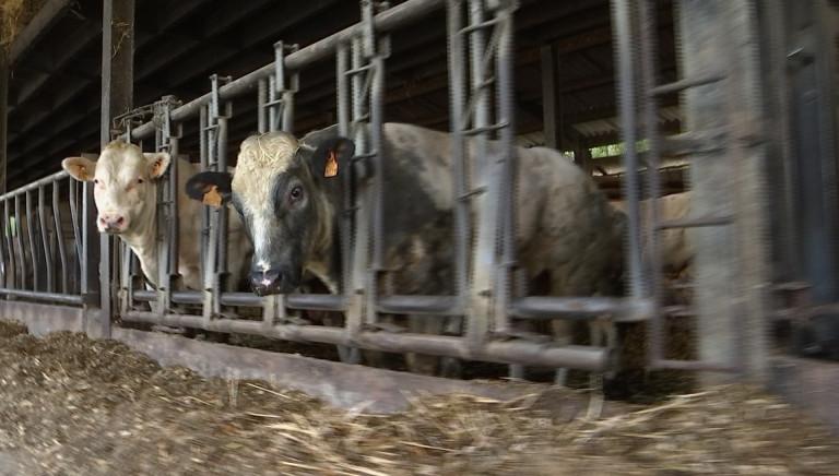 Les Saveurs d'Ardenne, une coopérative viandeuse en réaction à la chute de Veviba