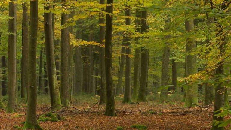 Gouvy. Le Bois de Ronce visé par un projet de 10 éoliennes.
