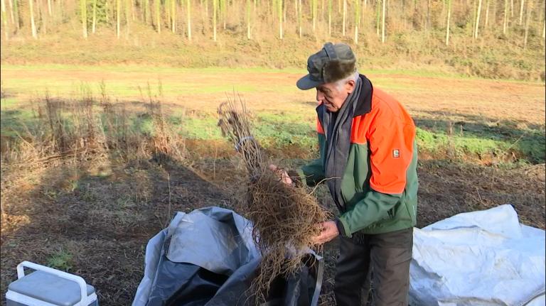 Les propriétaires forestiers attendent toujours le budget promis par la Wallonie pour le reboisement post-scolytes