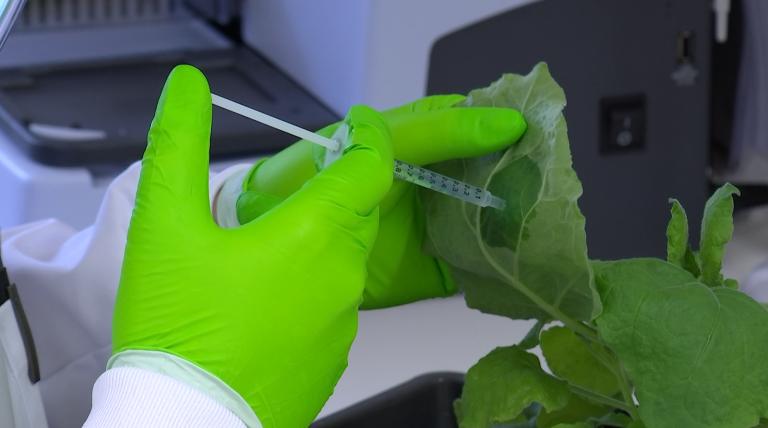 Marche. Un traitement contre le cancer grâce aux plantes ?