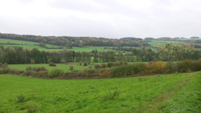 Wellin : encore plus de biodiversité dans la vallée de la Wimbe