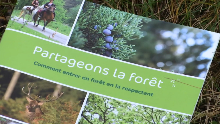 Partageons la forêt: une brochure, un site et bientôt une appli