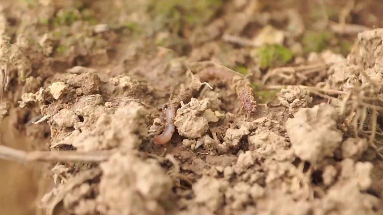 Un documentaire sur l'agriculture de conservation des sols