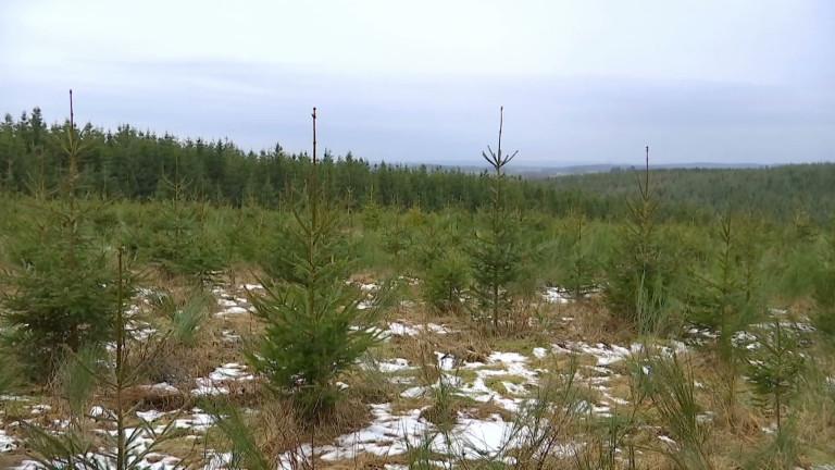 Reboiser nos forêts, mais pas n'importe comment !