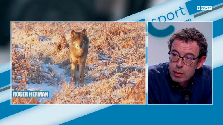 Le loup s'est-il installé durablement en province de Luxembourg ?