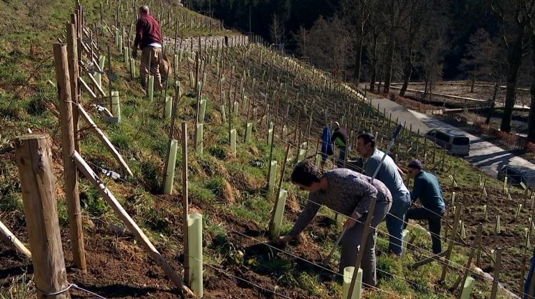 Neufchâteau. Des bénévoles entretiennent le vignoble des coteaux du Hays