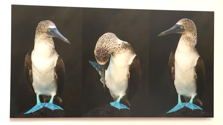 Arlon : la nature dans une expo photo