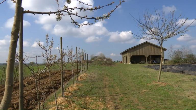 Habergy : Canopée, une coopérative micro ferme en agroforesterie