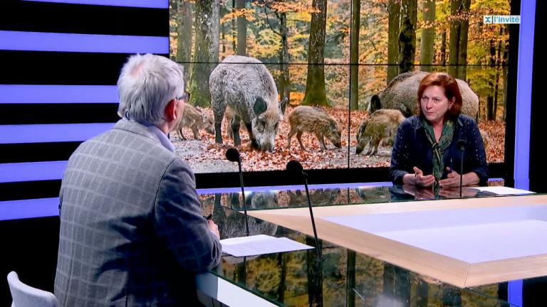 La Belgique exemplaire dans la lutte contre la Peste Porcine Africaine