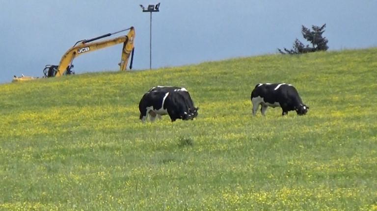 « On ne peut pas dire qu'une pâture dédiée à l'élevage soit un modèle de biodiversité »