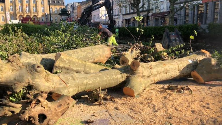 Arlon : émotion après l'abattage des arbres de la place Léopold