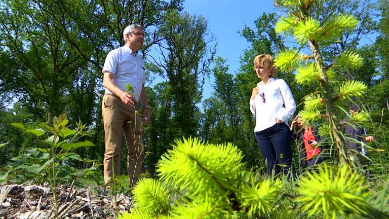 Des aides aux propriétaires forestiers pour une forêt plus résiliente