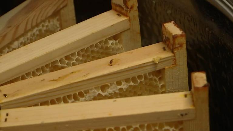 Michamps : une miellerie collective pour aider les jeunes apiculteurs