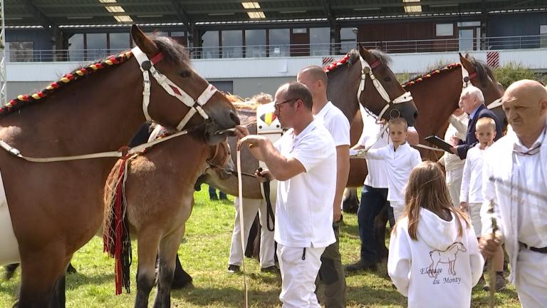 La 86e édition du concours du cheval de trait ardennais... sans la foire de Libramont