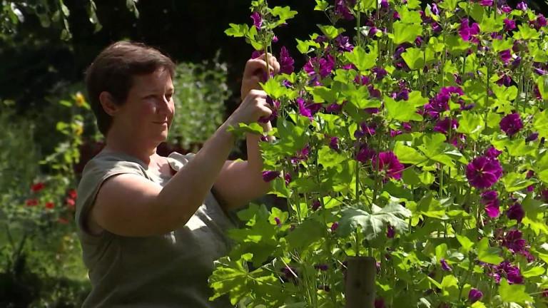 Assenois. Tisanes de la Strange. La récolte bat son plein pour Isabelle Monnier, productrice et herboriste