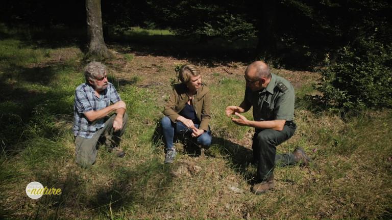 Nassonia : une forêt laboratoire