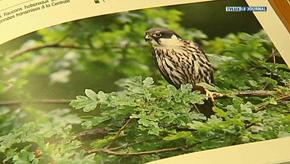 Wallonie : atlas des oiseaux